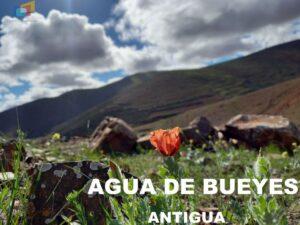 AGUA DE BUEYES ANTIGUA