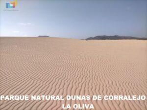 Parque Natural Dunas de Corralejo 01
